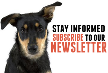 Stay informed with Rescue Express and subscribe to our newsletter